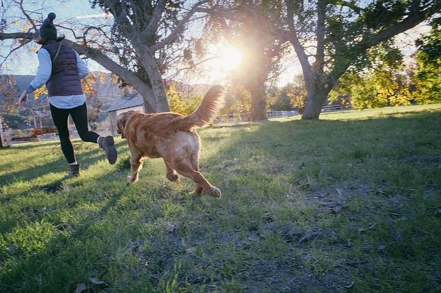 A kutyasétáltatás írott és íratlan szabályai