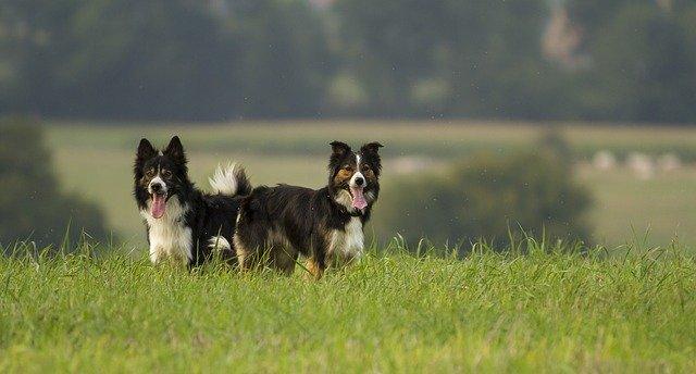 Miért szükséges egy kertben élő kutyát is sétáltatni?