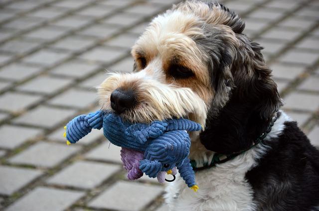 A kutyusod kedvenc játéka