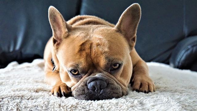 Tiszta lakás kutyával? Megvalósítható!