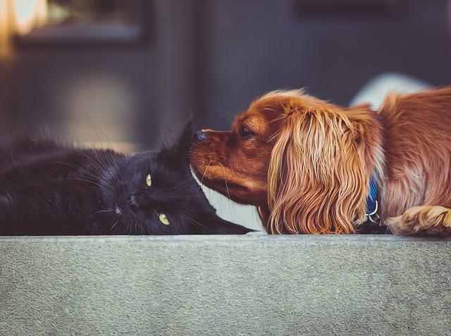 Létezik-e kutya-macska barátság?