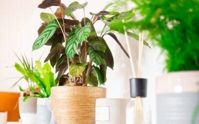 Így mentem meg a növényeimet – 1. rész