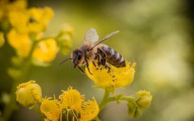 Elképesztő tények a kedvenc beporzóinkról, a méhekről